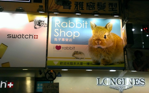 the-rabbit-shop